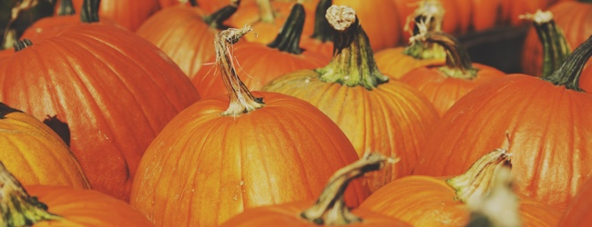 Halloween WordPress Discounts and Coupon Codes 2015